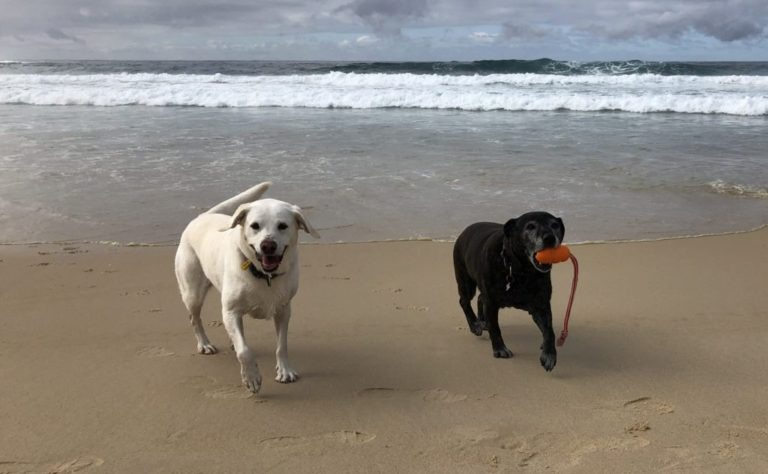 Ash and Lucy at the Beach with their Kong