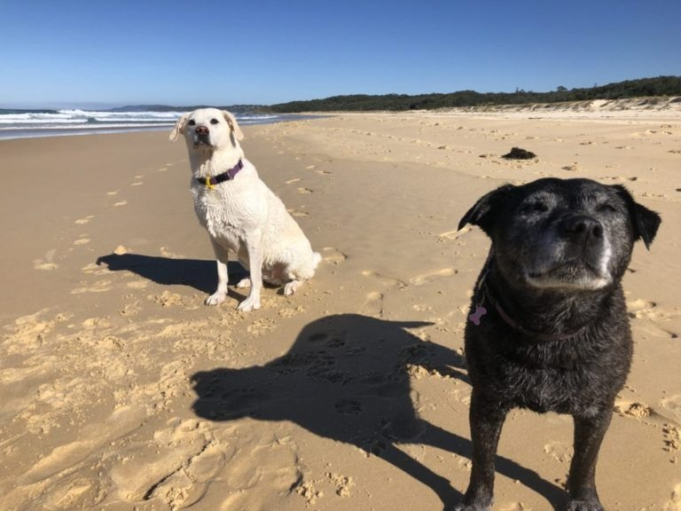 Ash and Lucy on dog friendly Racecourse Beach, Ulladulla, NSW