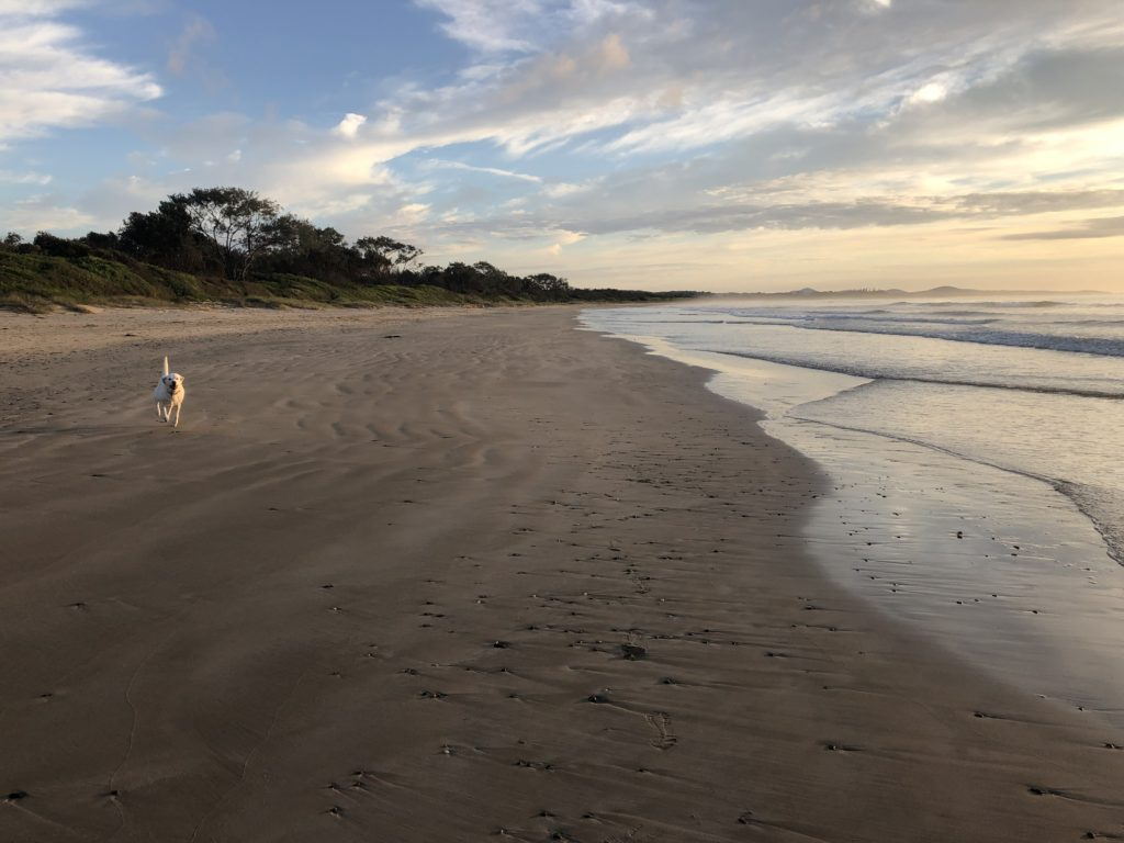 dog friendly Arrawarra Beach, NSW