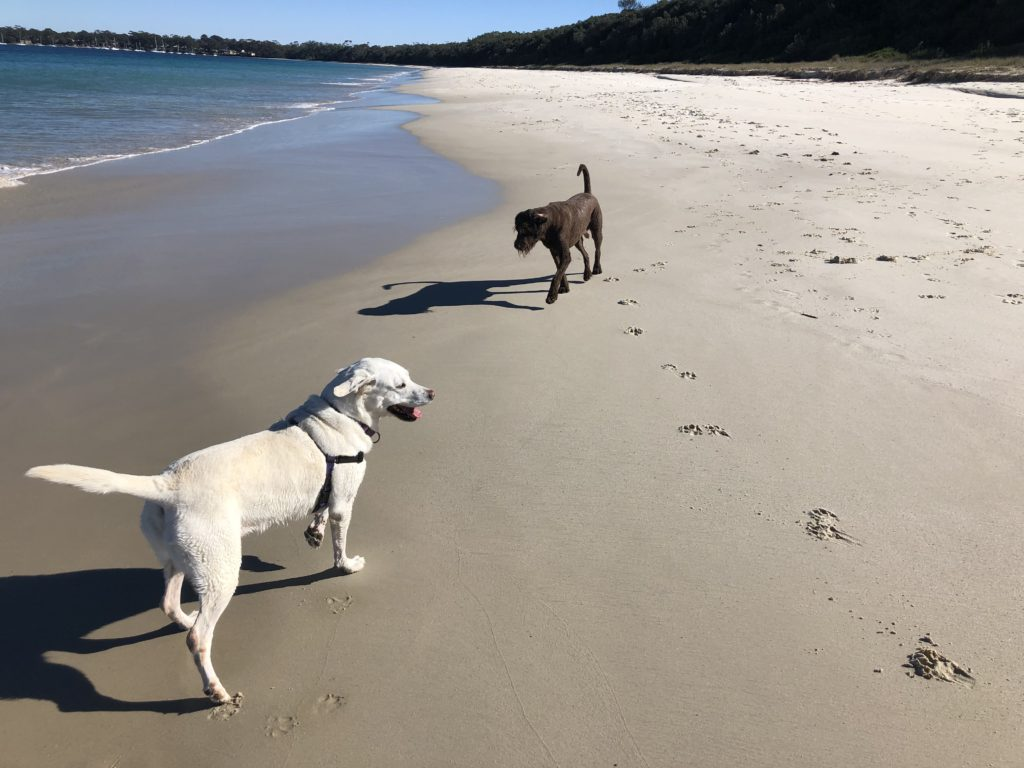 dog friendly Red Rock Beach, Callala Bay, NSW