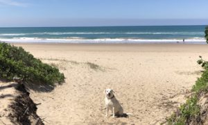 Old Bar Beach NSW Dog Friendly
